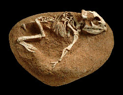 a history of dinosaurs and the evidence of their existence Paleontologists suggest that hadrosaurs, duck-billed dinosaurs, lived  fossils  can also provide evidence of the evolutionary history of organisms  have bones —they do leave behind evidence of their existence in the form.