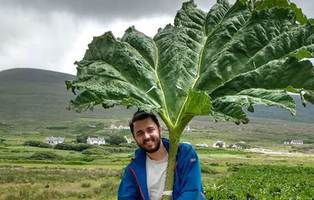 Maurício Cruz Mantoani is a PhD student in Prof. Bruce Osborne's lab. Maurício is researching the effects of the invasive plant Gunnera tinctoria (giant rhubarb) on greenhouse gas emissions in Achill Island.