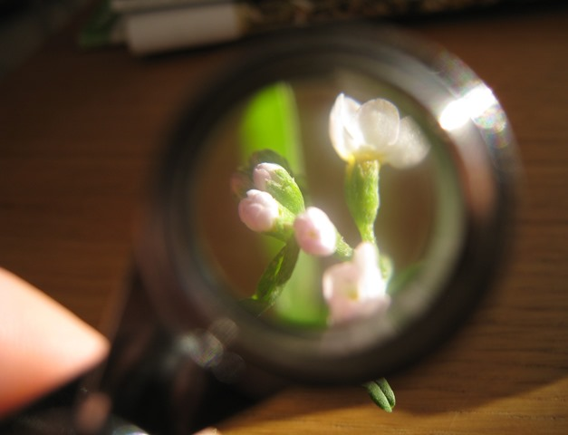 Plant under a magnifying glass