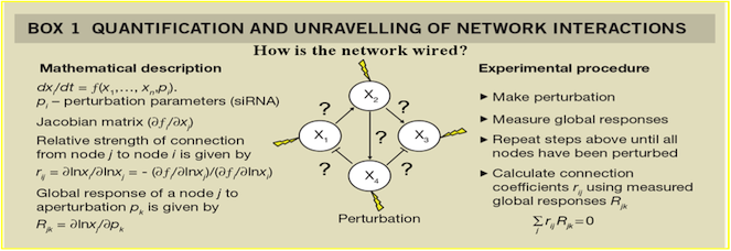 Network Interaction