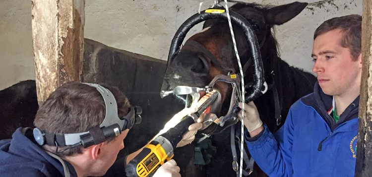 UCDVH Equine Field Service - students using powerfloat