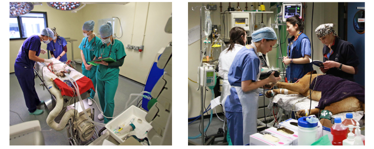 images showing veterinary anaesthesia in the ucd veterinary hospital